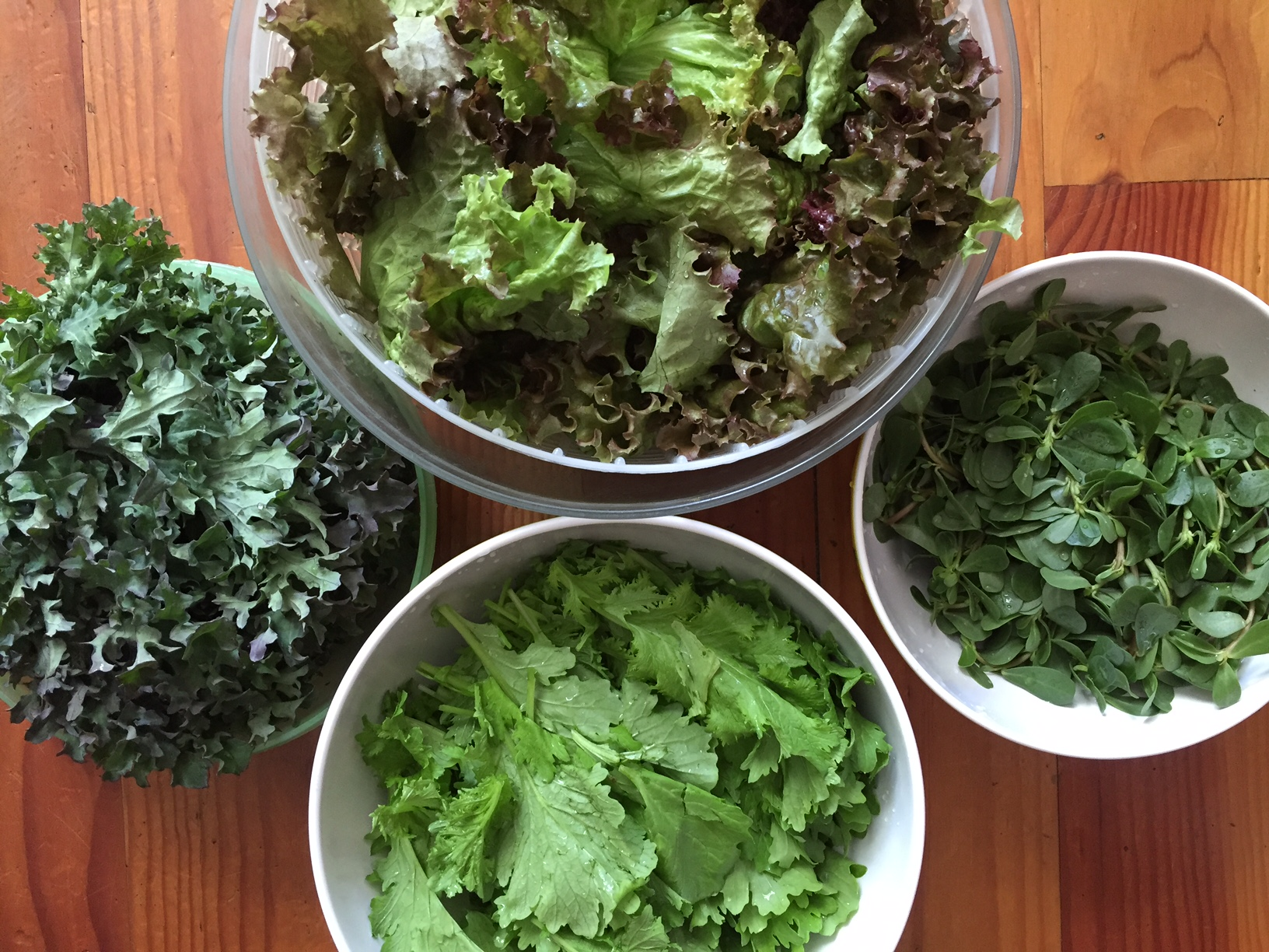 This week's greens: pizzo, purslane, kale, and red-leaf lettuce.